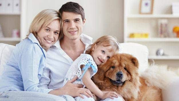 Wills & Trusts dog-young-family Direct Wills Stockbridge